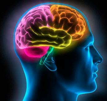 Todas nuestras decisiones pasan por el cerebro