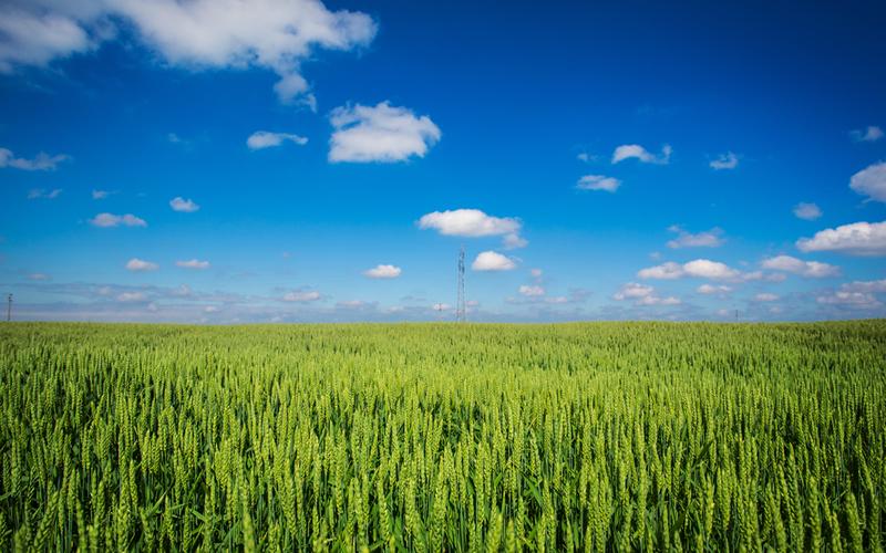 campo cereales